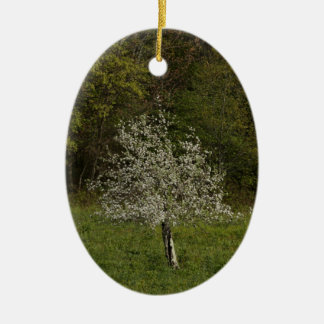Spring/Easter: apple blossom, apple tree in bloom Ceramic Ornament
