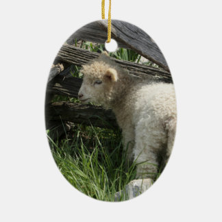 Spring/Easter: Two lambs same grass, One by fence Ceramic Ornament