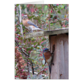 Spring Eastern Bluebirds Card