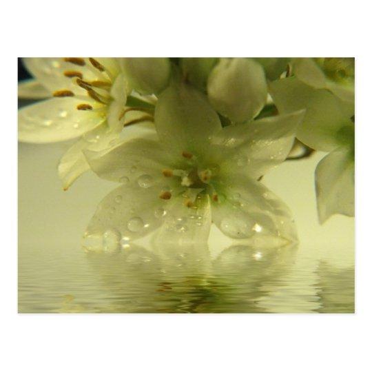 Spring Enchantment Postcard