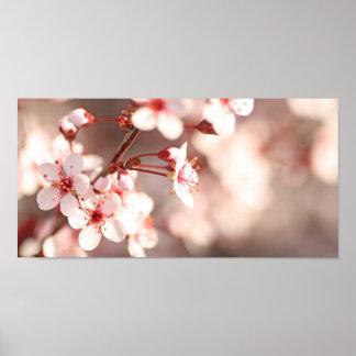 Spring Enchantment Poster