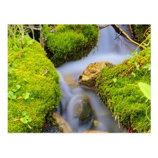 Spring Fed Mountain Stream Postcard
