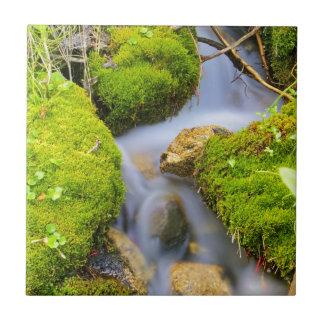 Spring Fed Mountain Stream Tiles