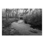 Spring-fed Tributary to the Blue River (Col Desat) Poster