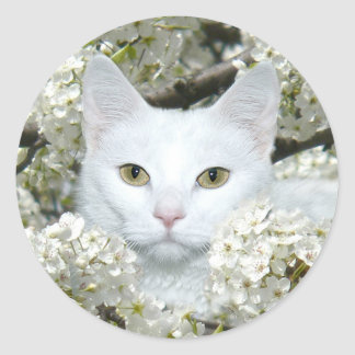 Spring fever cat classic round sticker