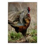'Spring Fever' Pheasant Notecard Greeting Card