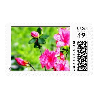 Spring Field Azaleas Blooms & Buds Postage