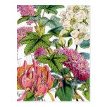 Spring Florals Postcard