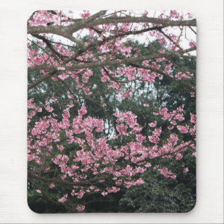 Spring Flow/Flowering Cherry Tree Mouse Pad