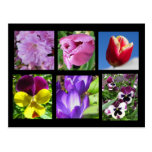 Spring Flower Collection Postcard