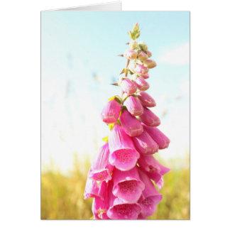 Spring Flower Pink Foxgloves Greeting Card