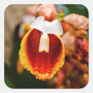 Spring Flower Square Sticker