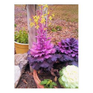 Spring Flowering Ornamental Cabbage Postcard