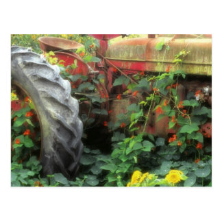 Spring flowers adorn an old tractor. postcard