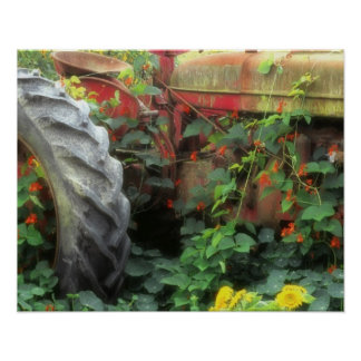 Spring flowers adorn an old tractor. poster