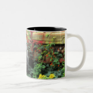 Spring flowers adorn an old tractor. Two-Tone coffee mug