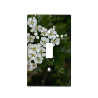 Spring flowers blossom. light switch cover