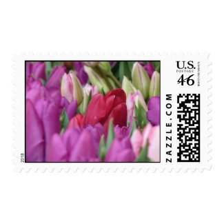 Spring flowers - Colorful Tulips Postage