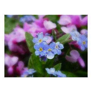 Spring Flowers - Forget Me Nots And Redbuds Print