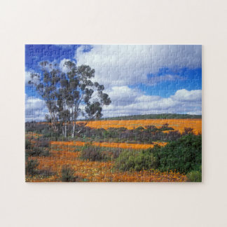 Spring flowers in Namaqualand, South Africa Jigsaw Puzzles