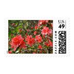 Spring Flowers Postage Stamp