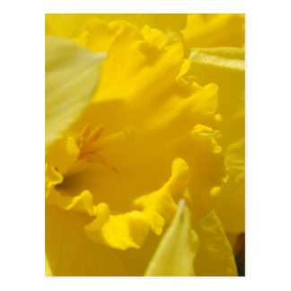 Spring flowers post cards