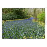 Spring flowers - River of Hyacinths Card
