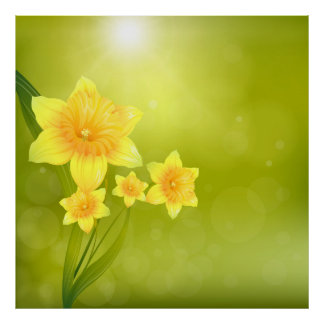 Spring Flowers Yellow Daffodils Poster