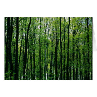 Spring Forest blank inside Card