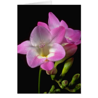 Spring freesia flowers card