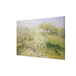 Spring Fruit Trees in Bloom Canvas Print