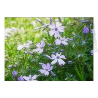 Spring Garden Blues - Creeping Phlox Greeting Cards