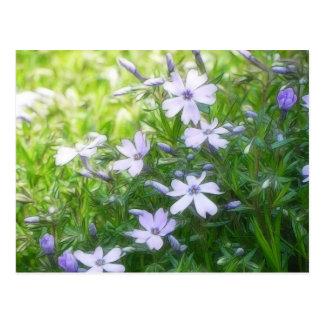 Spring Garden Blues - Creeping Phlox Post Card