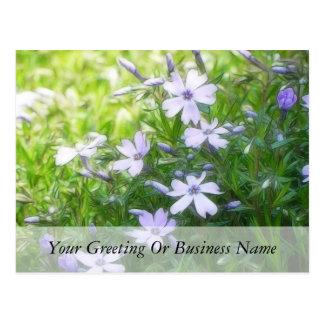 Spring Garden Blues - Creeping Phlox Postcard