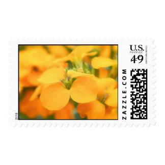 Spring Garden - Cheiranthus allionii Stamps