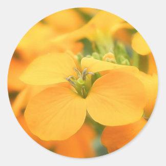 Spring Garden - Cheiranthus allionii Sticker