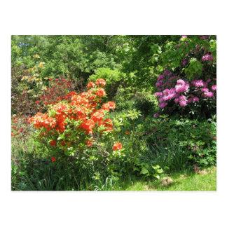 Spring Garden Postcard