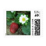 Spring Garden Stamp