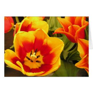 Spring Glory Tulip Card