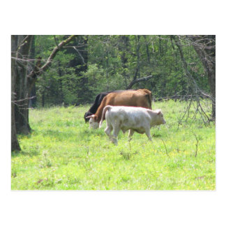 Spring Grazing in Louisiana Post Card