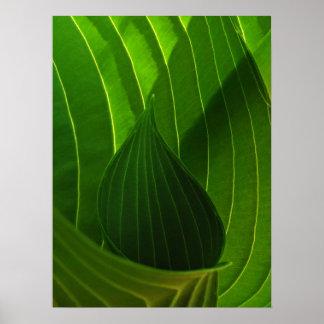 Spring Green Hosta Leaf Poster Print