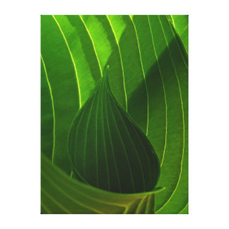 Spring Green Hosta Leaf Wrapped Canvas Print