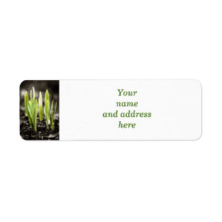 Spring green shoots label