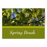 Spring green tree leaves spring break note card cards