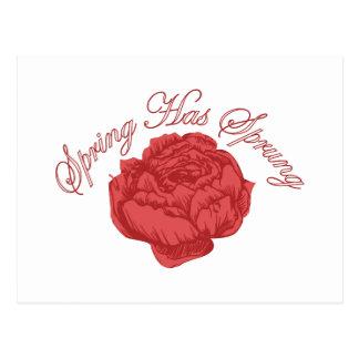 Spring Has Sprung Postcard