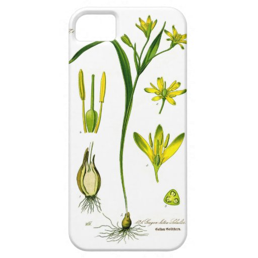 Spring Herbs iPhone 5 Cases