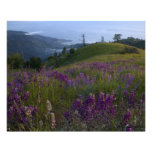 Spring in Big Sur Photo Print