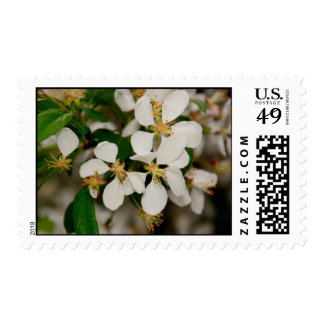 Spring In Bloom Postage Stamps