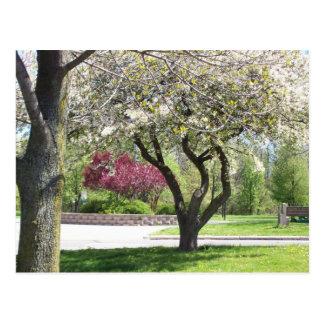Spring in Bloom postcard