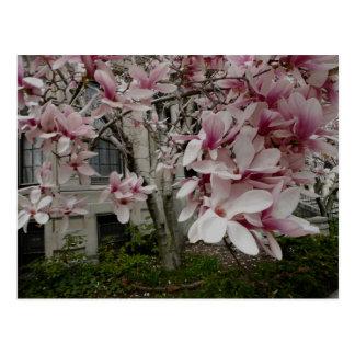 Spring in Boston Postcard